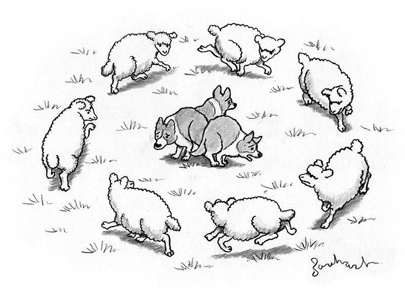 Cartoon Caption Contest Borchart