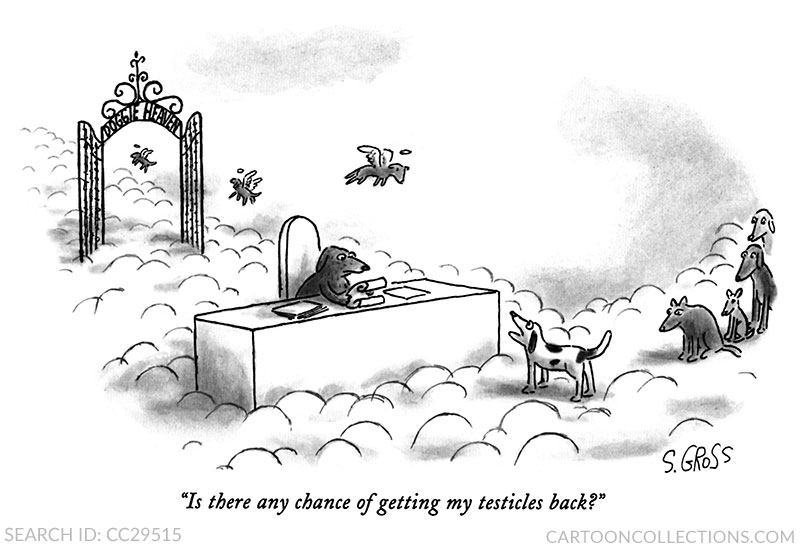 Sam Gross cartoons